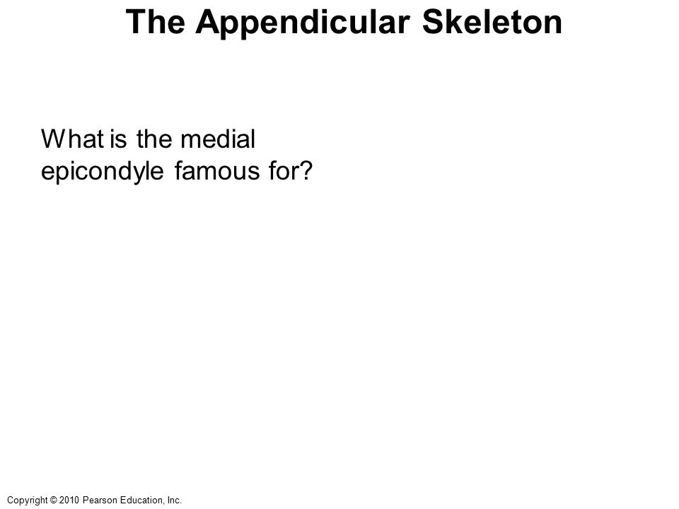 Copyright © 2010 Pearson Education, Inc. The Appendicular Skeleton What is the medial epicondyle famous for?