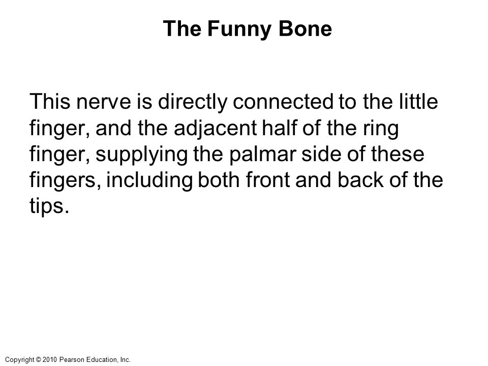 Copyright © 2010 Pearson Education, Inc. The Funny Bone This nerve is directly connected to the little finger, and the adjacent half of the ring finge