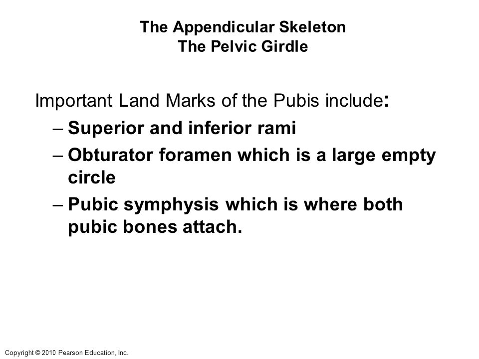 Copyright © 2010 Pearson Education, Inc. The Appendicular Skeleton The Pelvic Girdle Important Land Marks of the Pubis include : –Superior and inferio