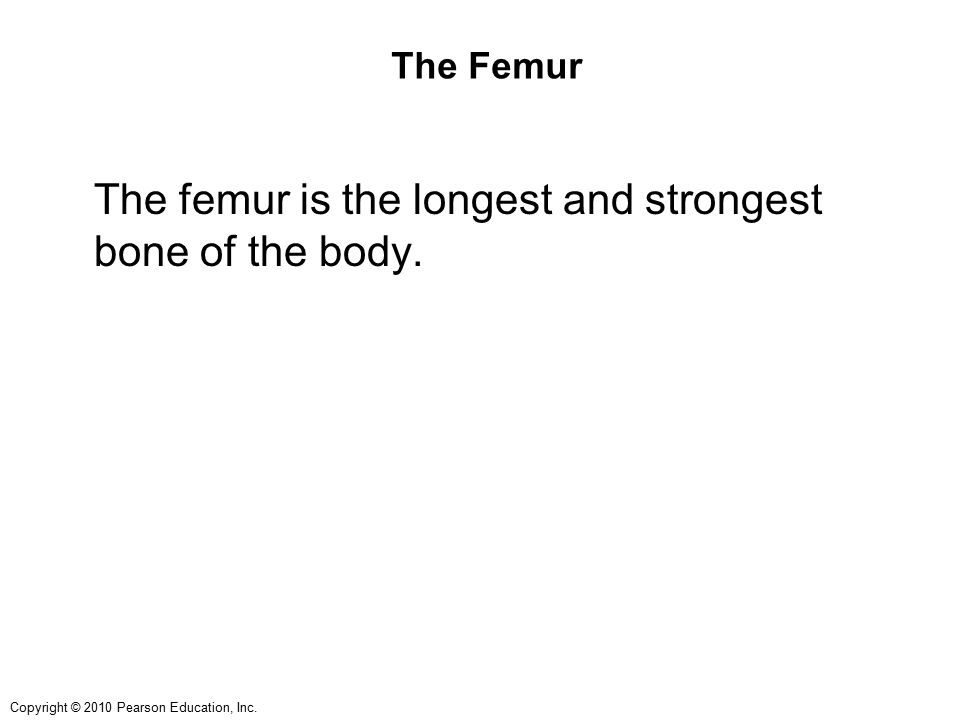 Copyright © 2010 Pearson Education, Inc. The Femur The femur is the longest and strongest bone of the body.