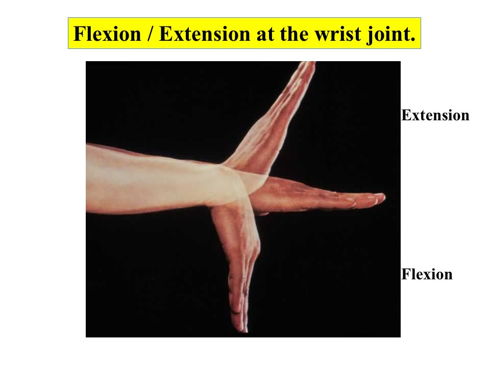 Flexion / Extension at the wrist joint. Flexion Extension