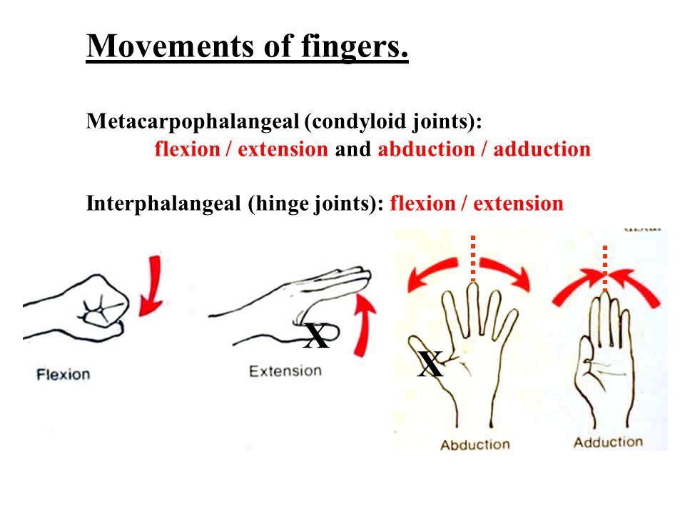 Movements of the thumb – a specialized digit, occur at right angles to the fingers.