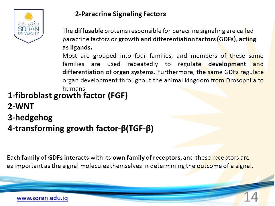 www.soran.edu.iq 2-Paracrine Signaling Factors The diffusable proteins responsible for paracrine signaling are called paracrine factors or growth and