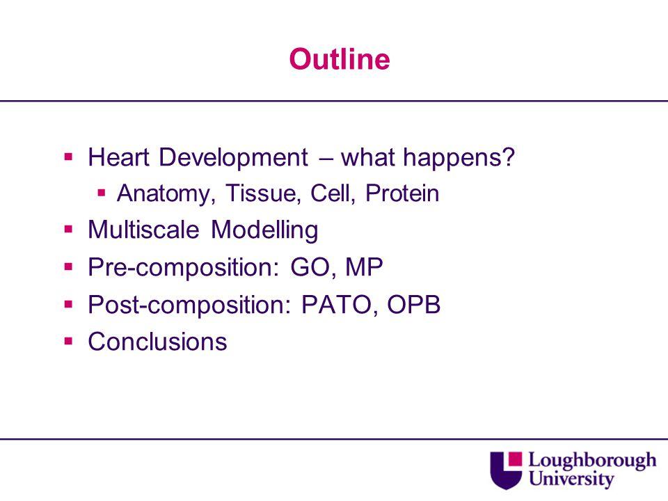 Outline  Heart Development – what happens.