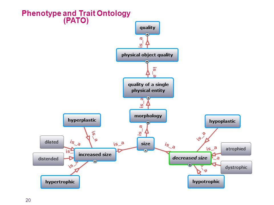 20 Phenotype and Trait Ontology (PATO)
