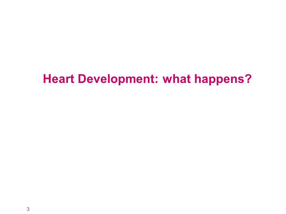 3 Heart Development: what happens