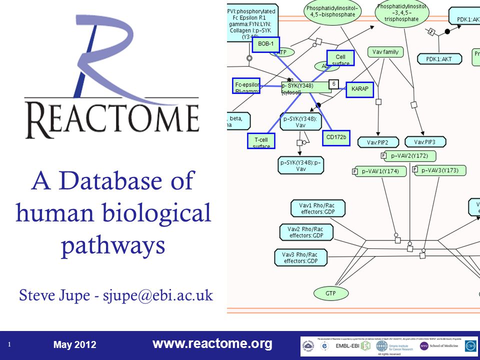 www.reactome.org May 2012 1 A Database of human biological pathways Steve Jupe - sjupe@ebi.ac.uk