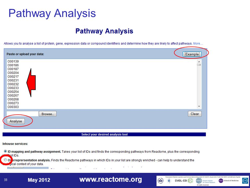www.reactome.org May 2012 33 Pathway Analysis