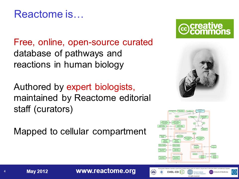 www.reactome.org May 2012 4 Reactome is… Free, online, open-source curated database of pathways and reactions in human biology Authored by expert biologists, maintained by Reactome editorial staff (curators) Mapped to cellular compartment