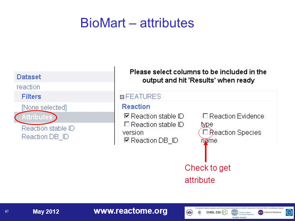 www.reactome.org May 2012 47 BioMart – attributes Check to get attribute