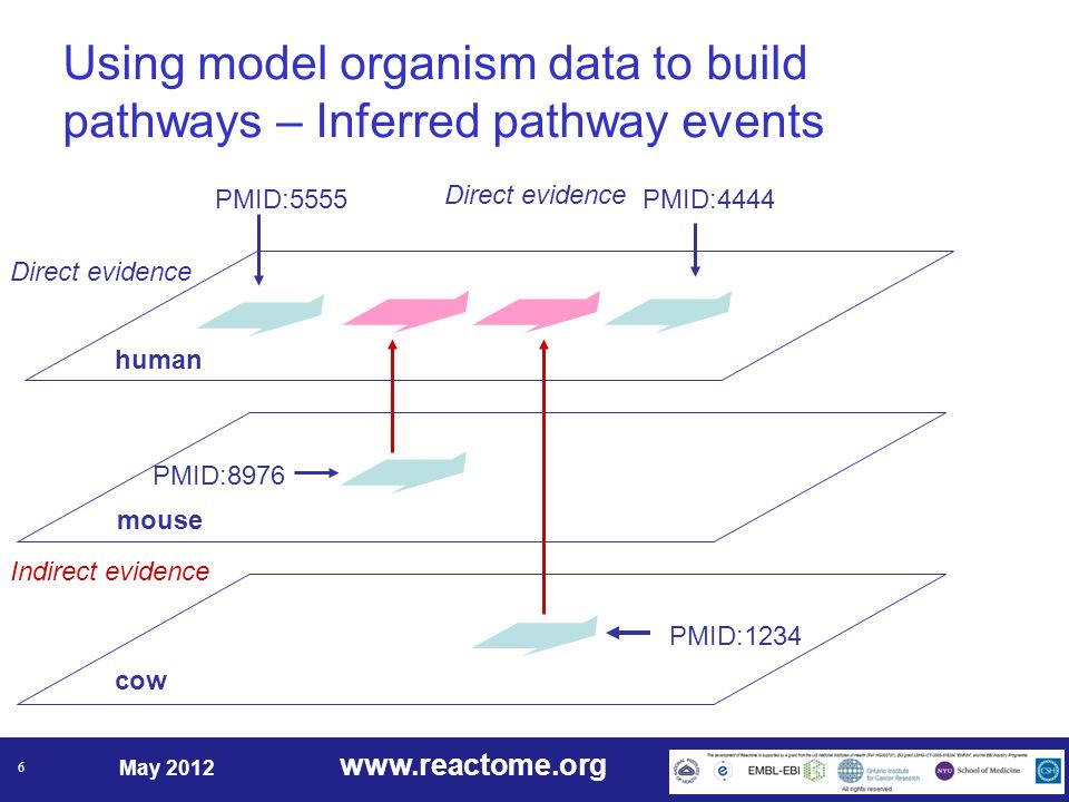 www.reactome.org May 2012 6 human PMID:5555PMID:4444 mouse cow Direct evidence Indirect evidence PMID:8976 PMID:1234 Using model organism data to build pathways – Inferred pathway events