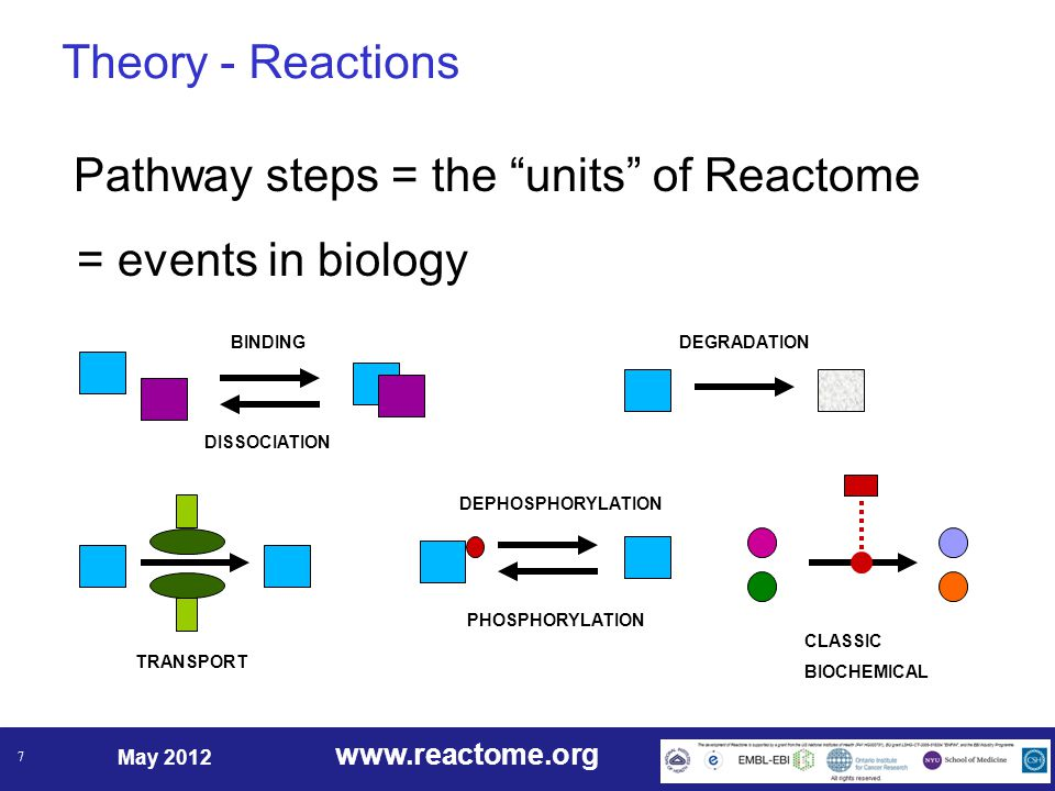 www.reactome.org May 2012 7 Theory - Reactions Pathway steps = the units of Reactome = events in biology TRANSPORT CLASSIC BIOCHEMICAL BINDING DISSOCIATION DEGRADATION PHOSPHORYLATION DEPHOSPHORYLATION