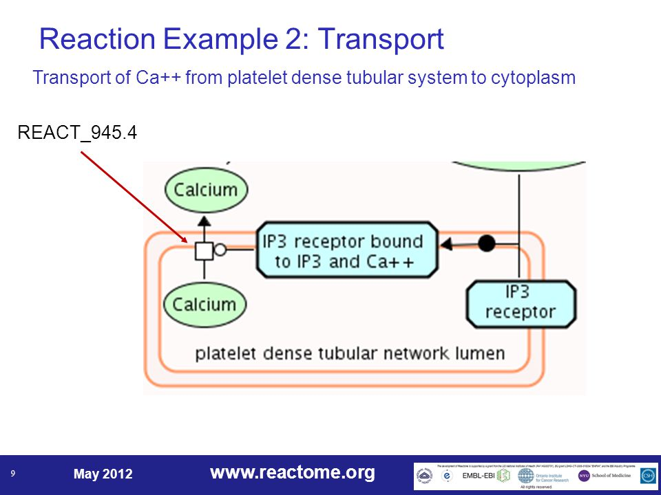www.reactome.org May 2012 9 Reaction Example 2: Transport REACT_945.4 Transport of Ca++ from platelet dense tubular system to cytoplasm