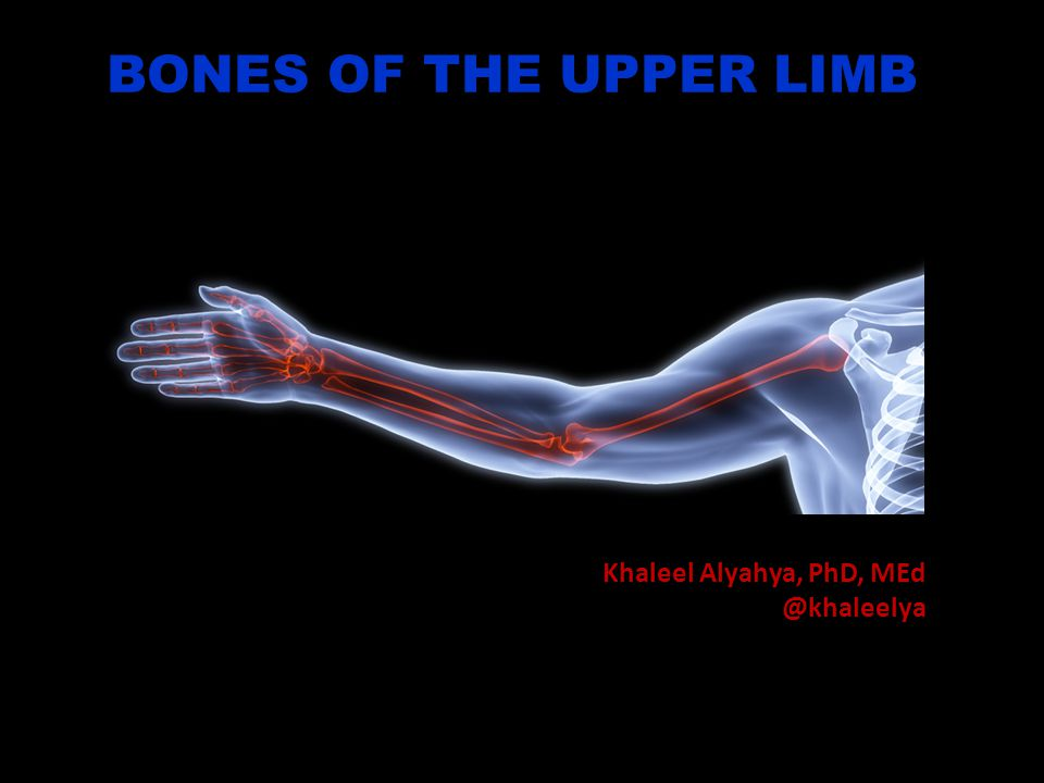 OBJECTIVES At the end of the lecture, students should be able to: List the different bones of the Upper Limb.