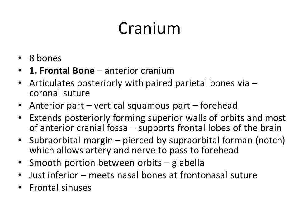 Figure 7.4a (a) Anterior view Mandibular symphysis Frontal bone Glablla Frontonasal suture Supraorbital foramen (noch) Supraorbital margin