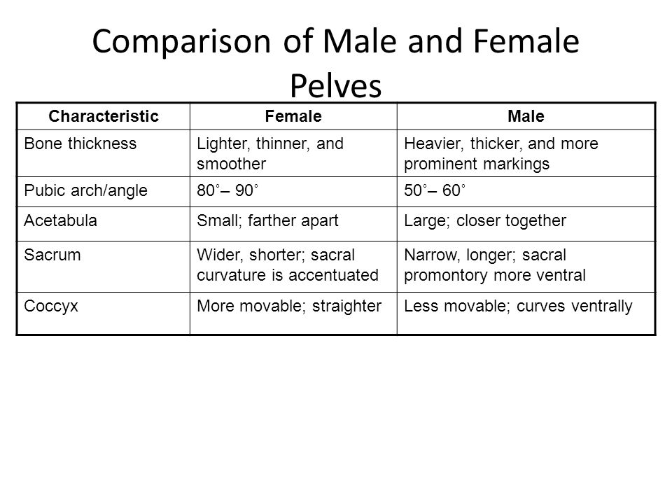 Comparison of Male and Female Pelves CharacteristicFemaleMale Bone thicknessLighter, thinner, and smoother Heavier, thicker, and more prominent markin