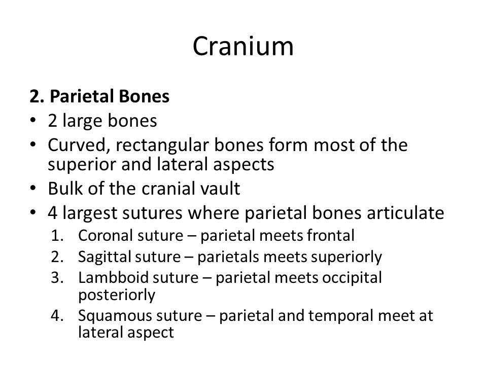 Figure 7.4a Parietal bone