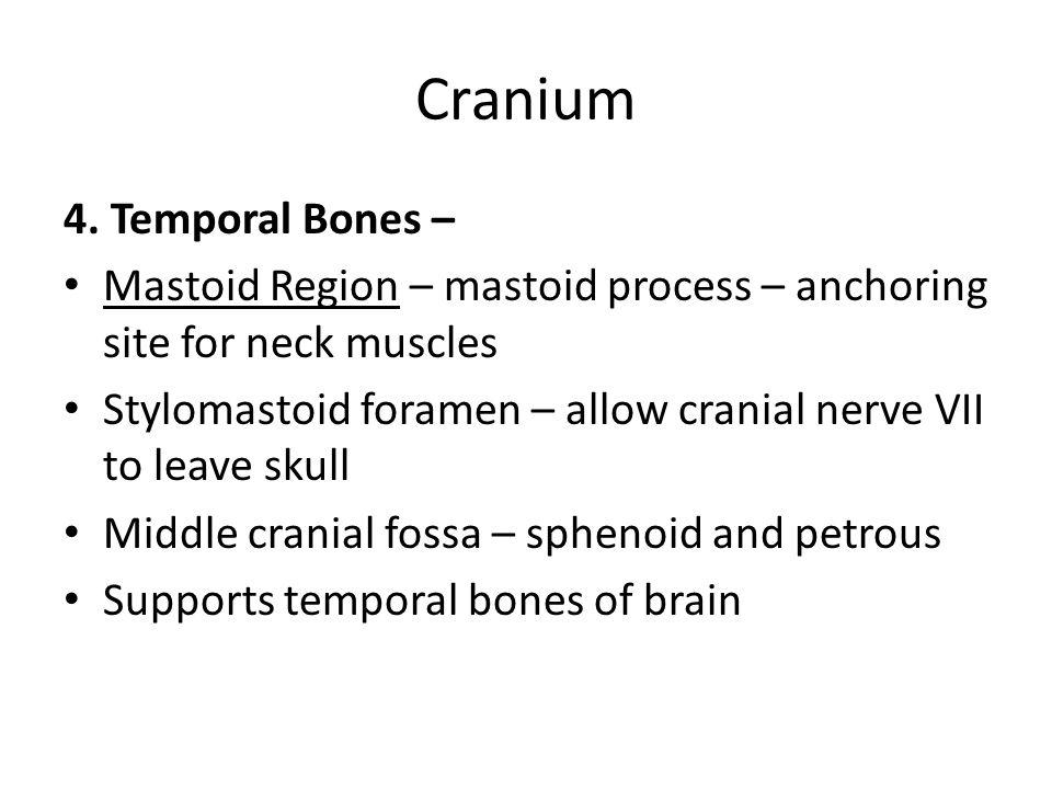 Carinum 4.