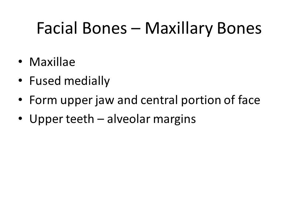 Figure 7.11b Frontal process Articulates with frontal bone Anterior nasal spine Infraorbital foramen Alveolar margin (b) Maxilla, right lateral view Orbital surface Zygomatic process (cut)
