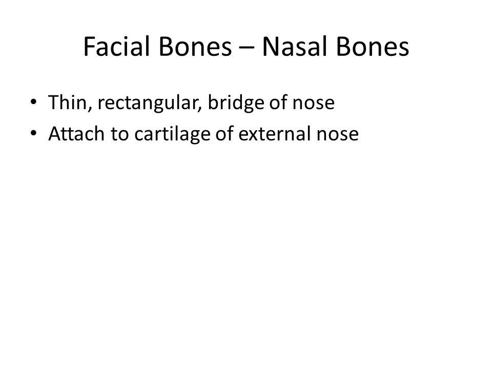 Figure 7.5a Nasal bone Thin, rectangular, bridge of nose Attach to cartilage of external nose Facial Bones – Nasal Bones
