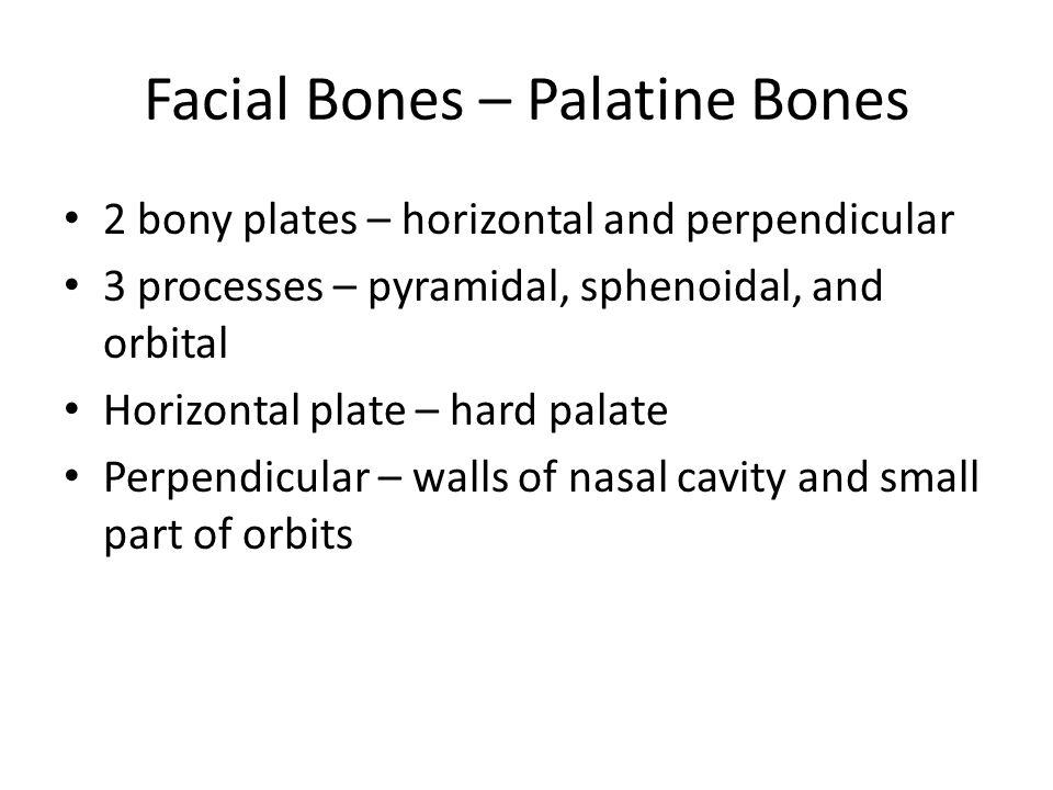 Figure 7.6a Incisive fossa Median palatine suture Intermaxillary suture Infraorbital foramen Maxilla Sphenoid bone (greater wing) Maxilla (palatine process) Hard palate (a) Inferior view of the skull (mandible removed) Palatine bone (horizontal plate)