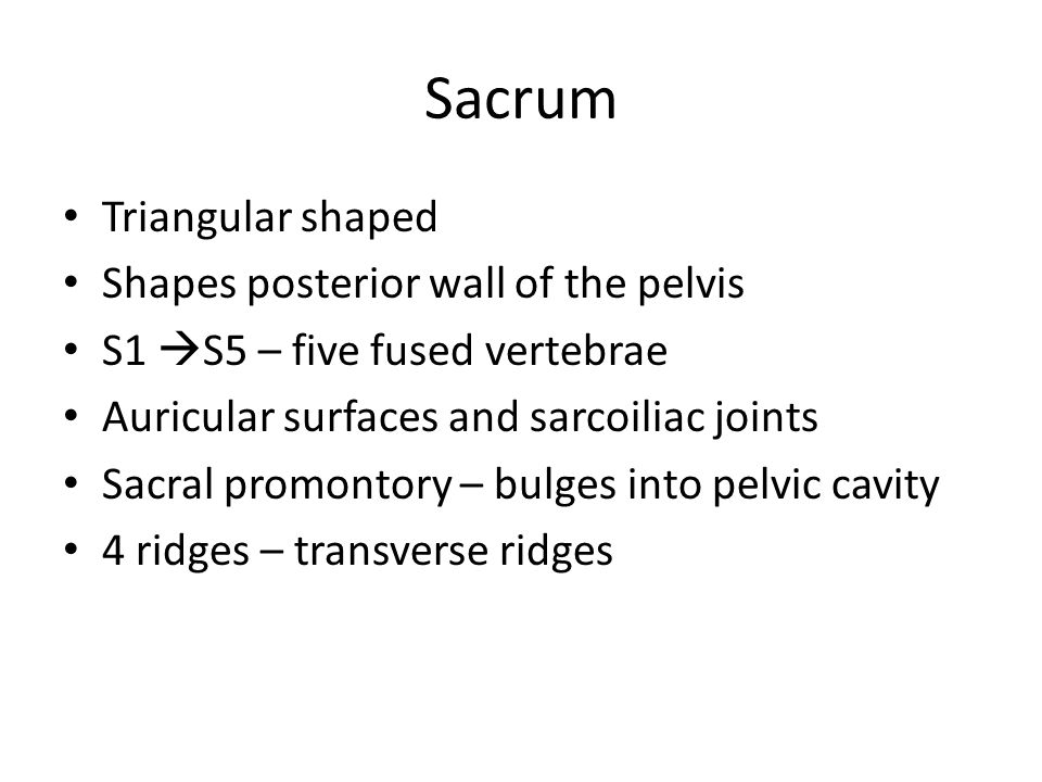 Sacrum Triangular shaped Shapes posterior wall of the pelvis S1  S5 – five fused vertebrae Auricular surfaces and sarcoiliac joints Sacral promontory