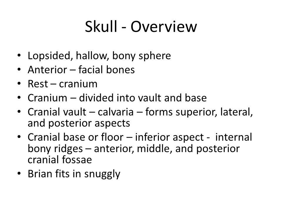 Figure 7.2b Anterior cranial fossa Middle cranial fossa Posterior cranial fossa (b) Superior view of the cranial fossae