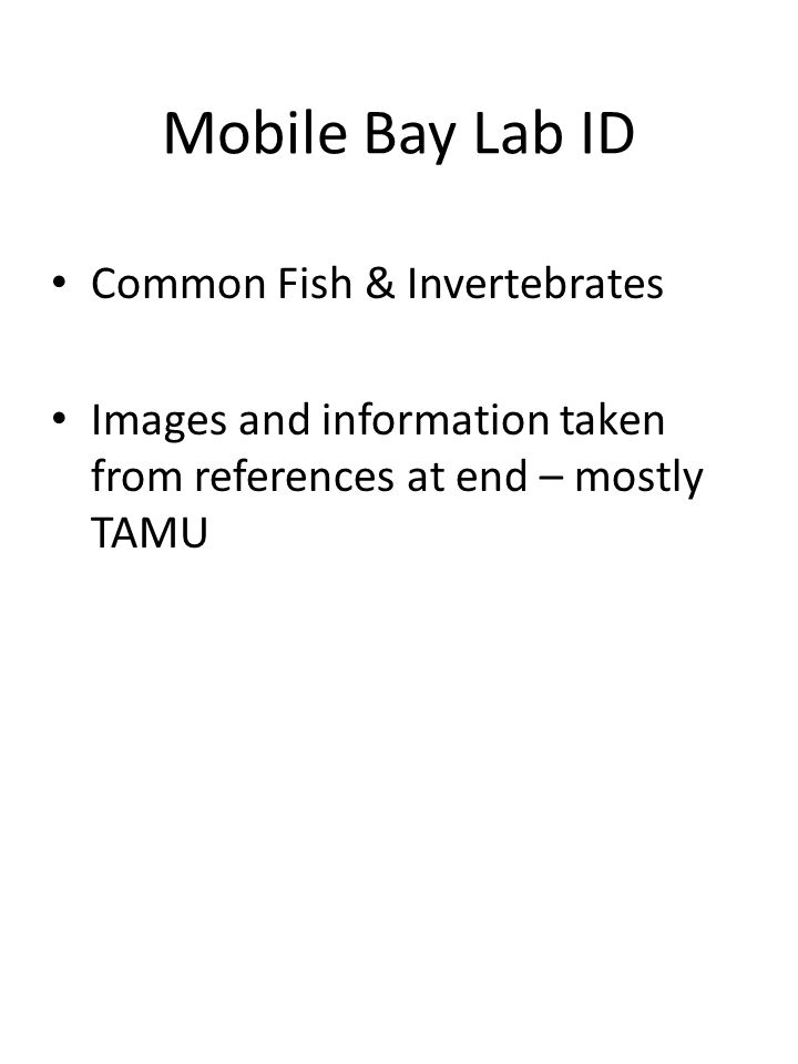 Mobile Bay Lab ID Common Fish & Invertebrates Images and information taken from references at end – mostly TAMU