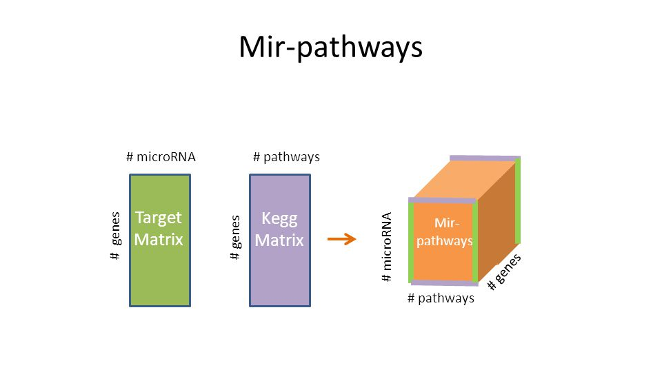 Mir-pathways # genes # microRNA Target Matrix # genes # pathways Kegg Matrix # pathways # microRNA # genes Mir- pathways