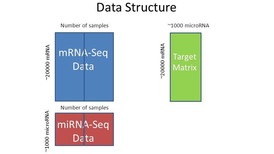 Data Structure Number of samples ~20000 mRNA ~1000 microRNA ~20000 mRNA ~1000 microRNA mRNA-Seq Data miRNA-Seq Data Target Matrix