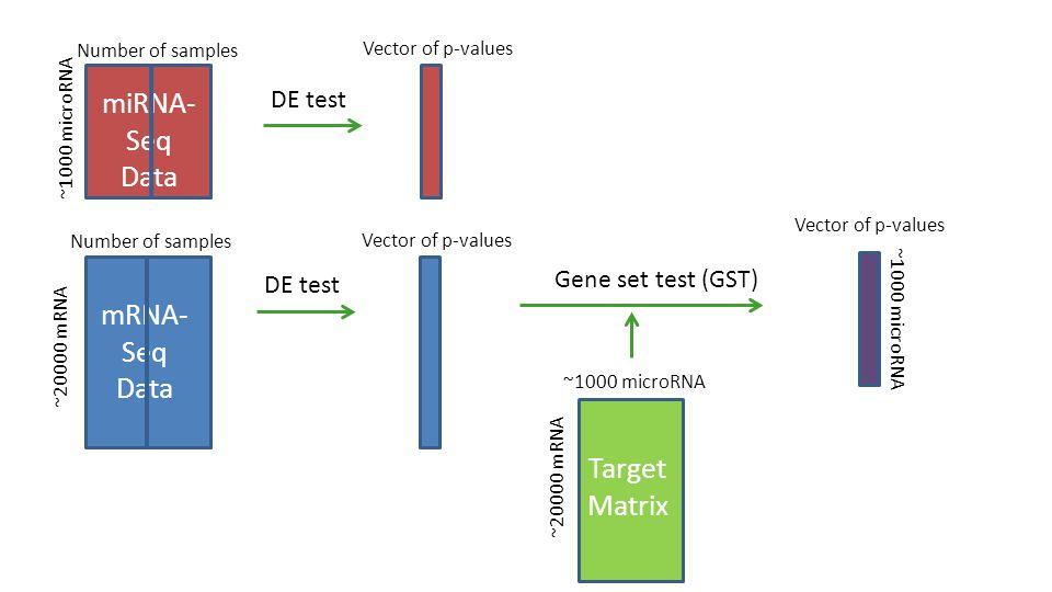 ~20000 mRNA ~1000 microRNA Target Matrix Number of samples ~20000 mRNA mRNA- Seq Data ~1000 microRNA Number of samples miRNA- Seq Data ~1000 microRNA DE test Vector of p-values Gene set test (GST) Vector of p-values