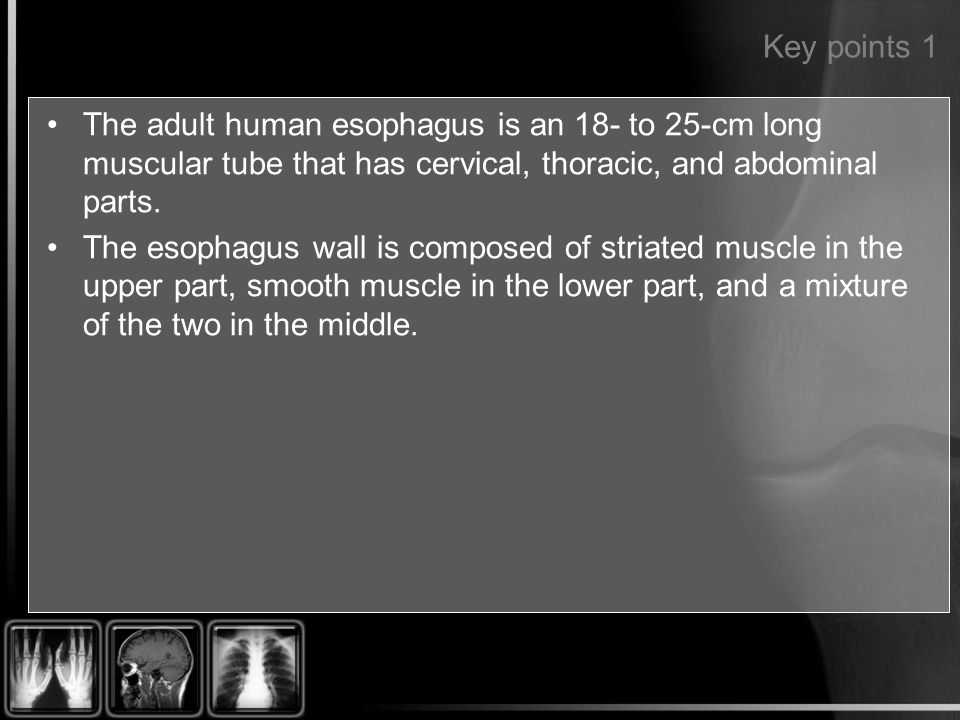 Key points 1 The adult human esophagus is an 18- to 25-cm long muscular tube that has cervical, thoracic, and abdominal parts. The esophagus wall is c
