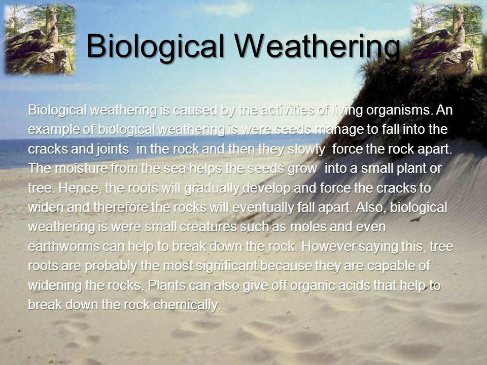 Biological Weathering Biological weathering is caused by the activities of living organisms. An example of biological weathering is were seeds manage