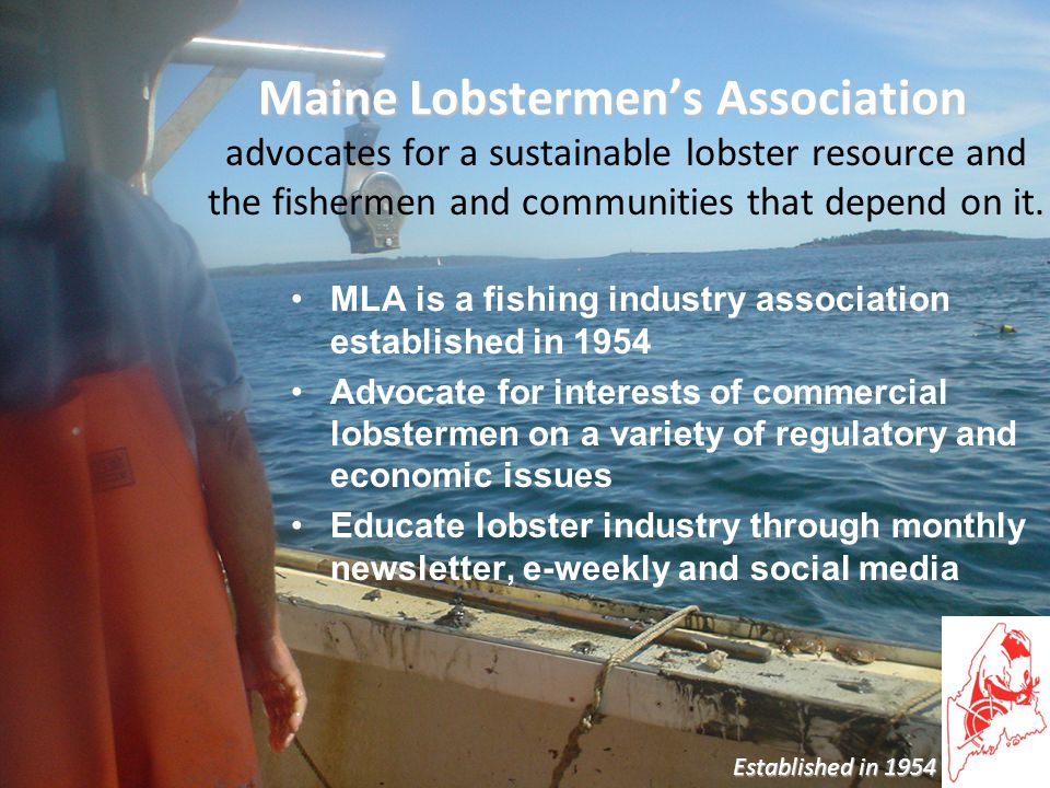 Maine Lobstermen's Association. advocates for a sustainable lobster resource and the fishermen and communities that depend on it. MLA is a fishing ind
