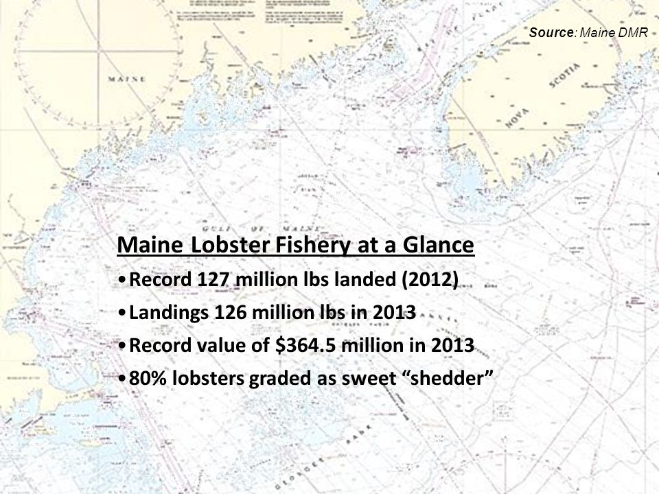 Maine Lobster Fishery at a Glance Record 127 million lbs landed (2012) Landings 126 million lbs in 2013 Record value of $364.5 million in 2013 80% lobsters graded as sweet shedder Source: Maine DMR