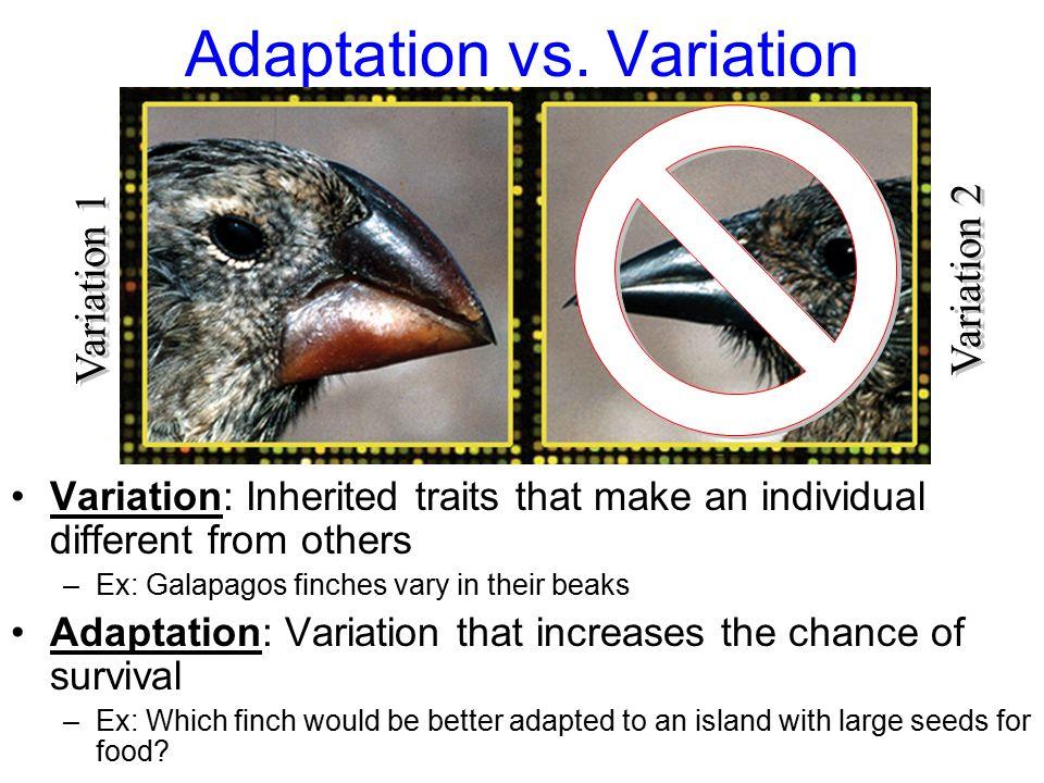 Adaptation vs.