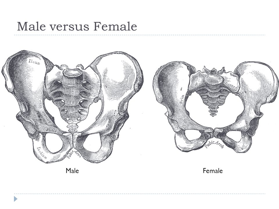 Male versus Female MaleFemale