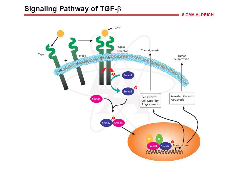 Signaling Pathway of TGF-  SIGMA-ALDRICH