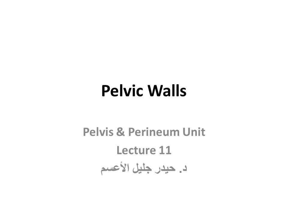 Pelvic Diaphragm (Pelvic Floor) It is formed by important levatores ani muscles and small coccygeus muscles and their covering fasciae.
