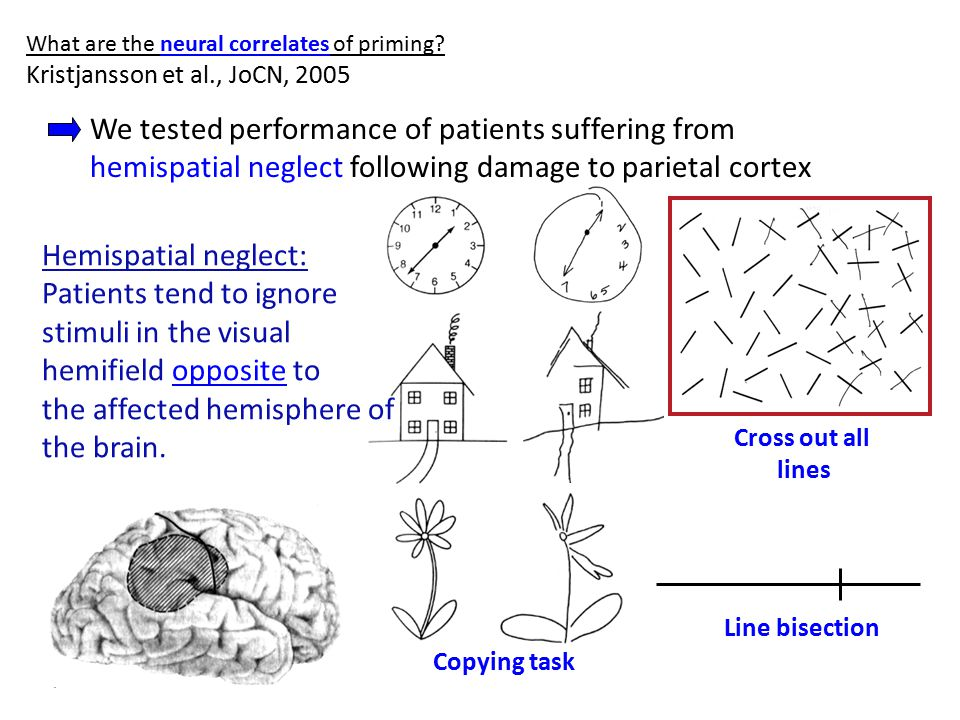 What are the neural correlates of priming.