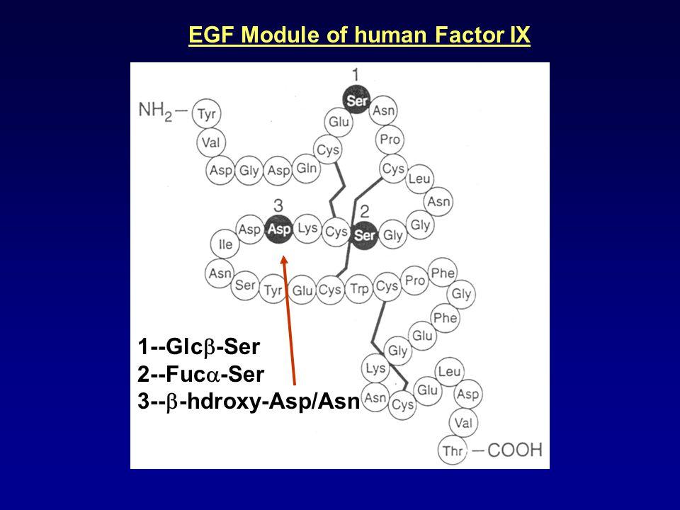 1--Glc  -Ser 2--Fuc  -Ser 3--  -hdroxy-Asp/Asn EGF Module of human Factor IX