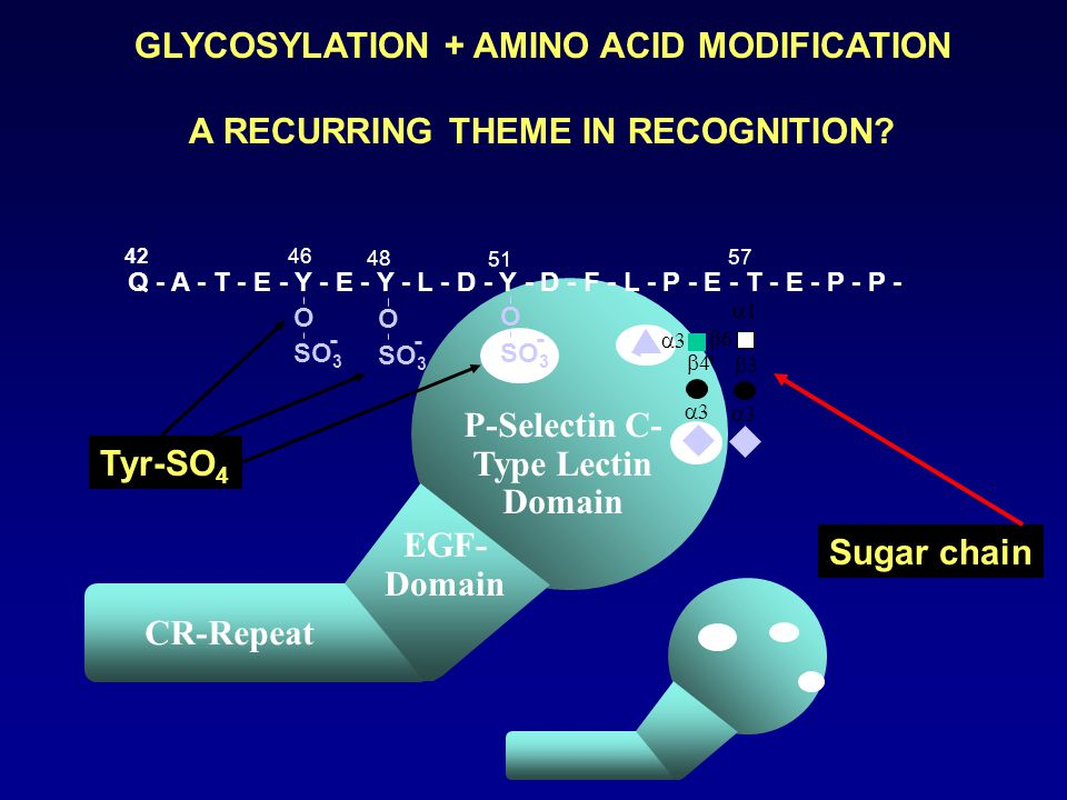 GLYCOSYLATION + AMINO ACID MODIFICATION A RECURRING THEME IN RECOGNITION.