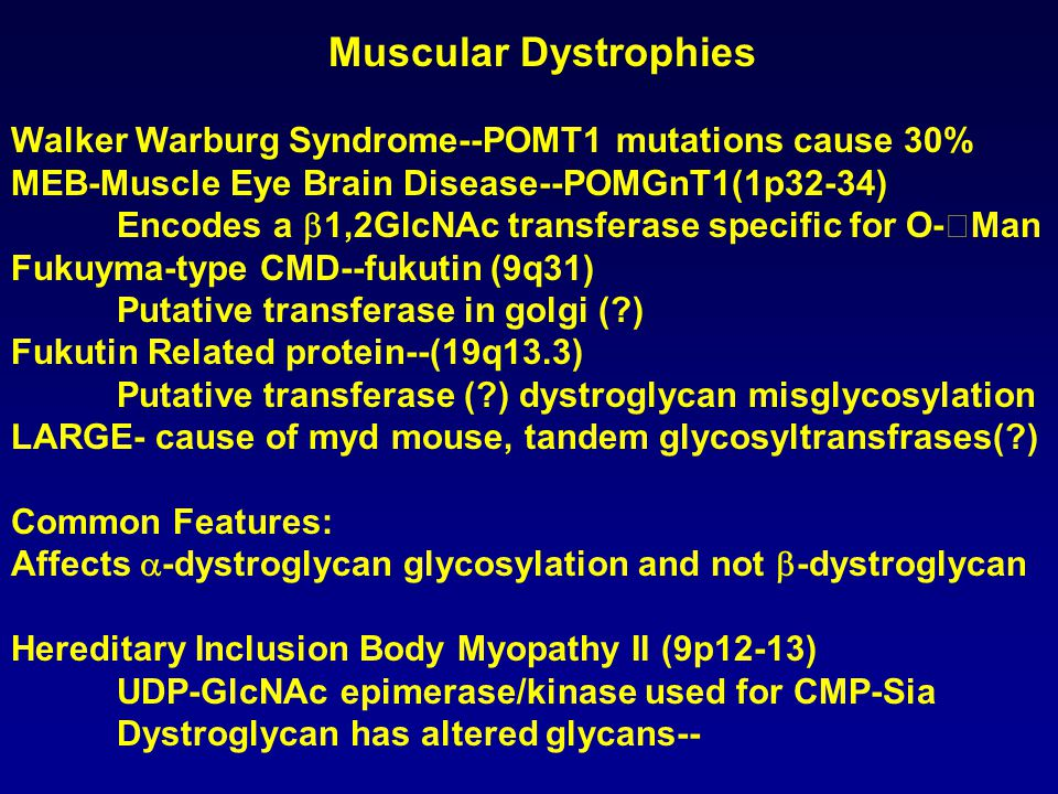 Muscular Dystrophies Walker Warburg Syndrome--POMT1 mutations cause 30% MEB-Muscle Eye Brain Disease--POMGnT1(1p32-34) Encodes a  1,2GlcNAc transfera
