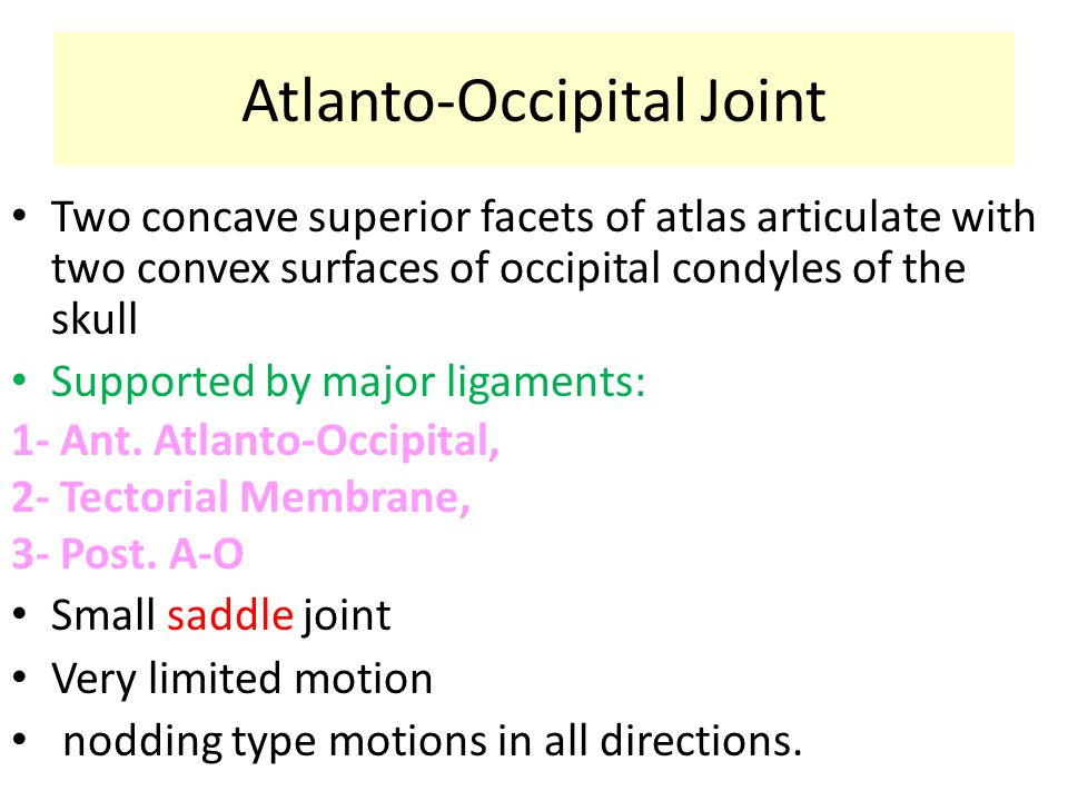 Atlanto-Occipital Joint Two concave superior facets of atlas articulate with two convex surfaces of occipital condyles of the skull Supported by major