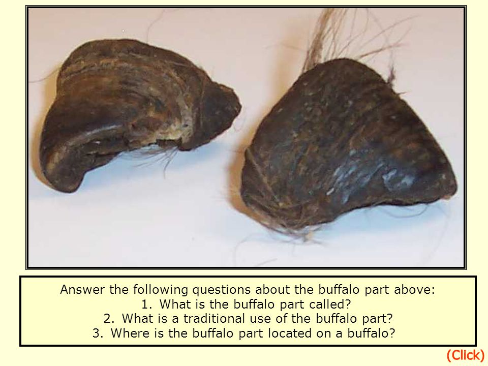 Answer the following questions about the buffalo part above: 1.What is the buffalo part called.