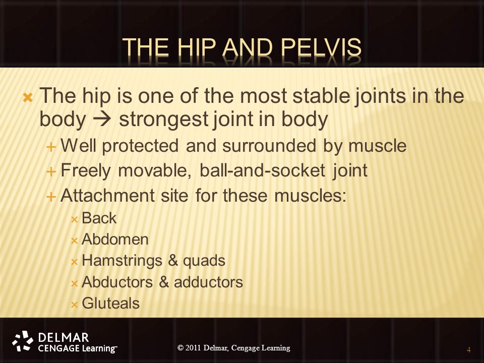 © 2010 Delmar, Cengage Learning 4 © 2011 Delmar, Cengage Learning  The hip is one of the most stable joints in the body  strongest joint in body  W