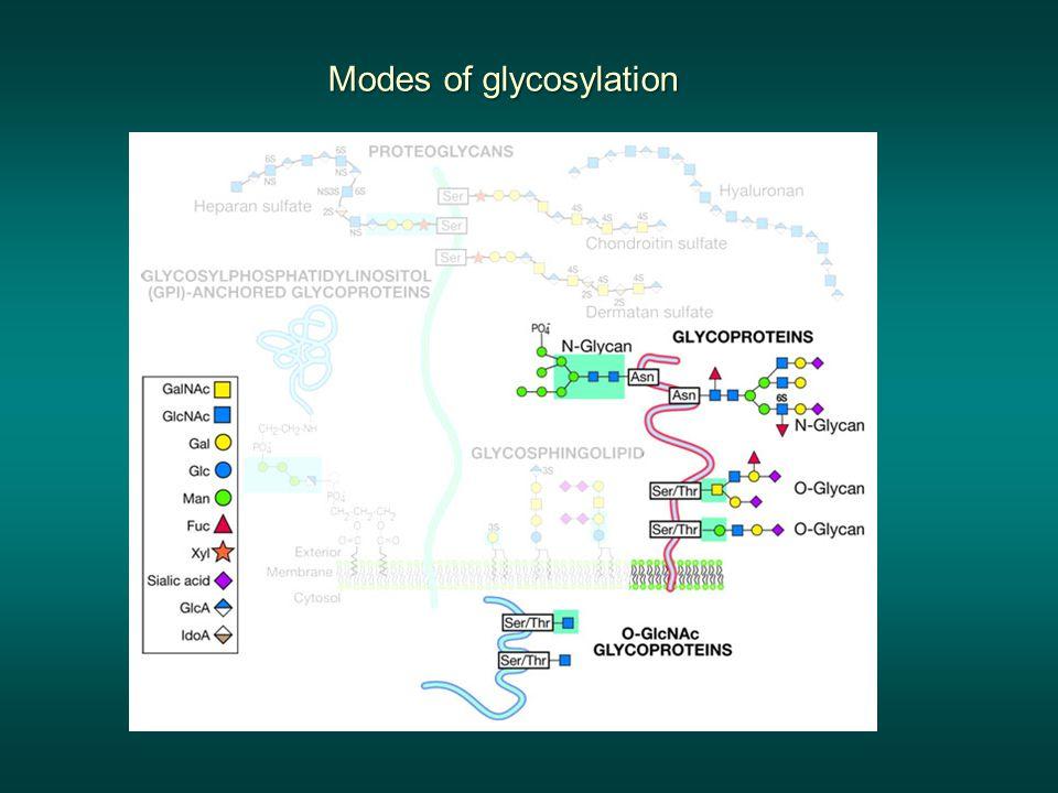 Modes of glycosylation