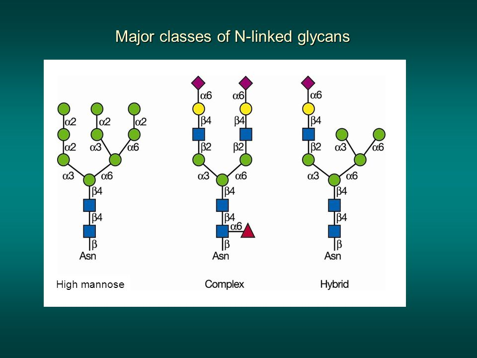 Major classes of N-linked glycans High mannose