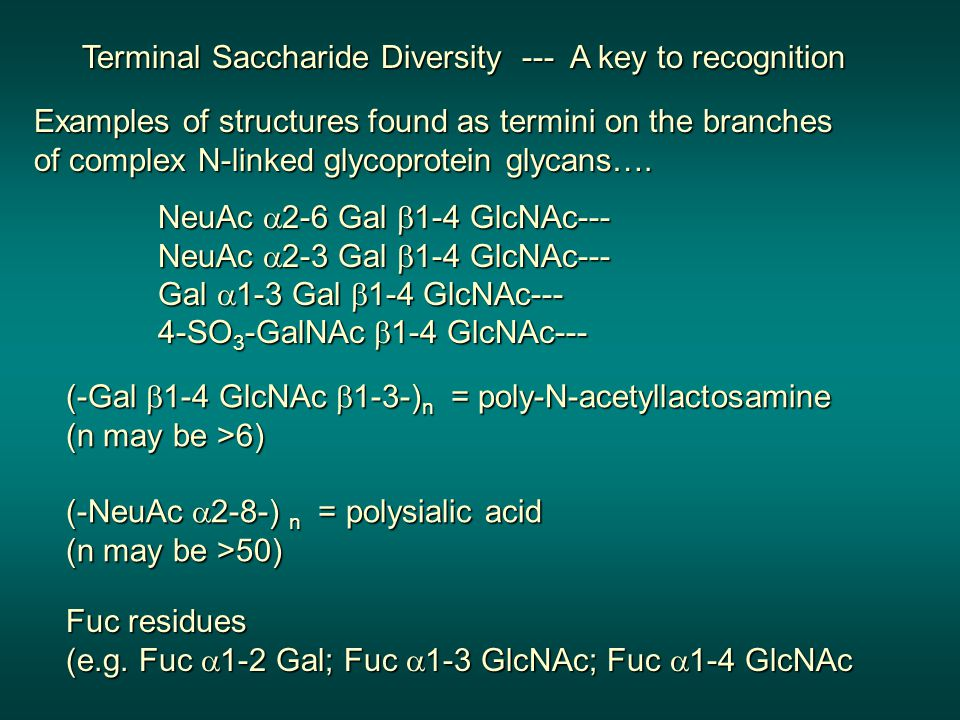 Examples of structures found as termini on the branches of complex N-linked glycoprotein glycans….