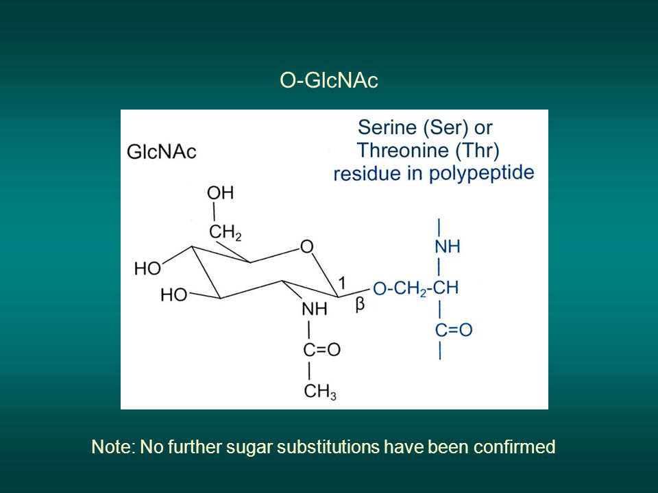 O-GlcNAc Note: No further sugar substitutions have been confirmed